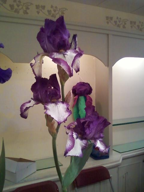 32nd Annual Iris Show